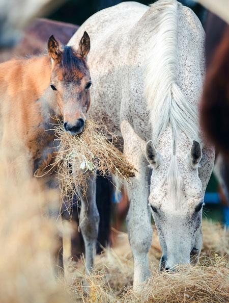 Körpersprache im Pferdetraining