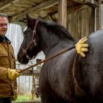 Horseman Ausgabe April 2016 Beitrag Angstfaktor Hufschmied