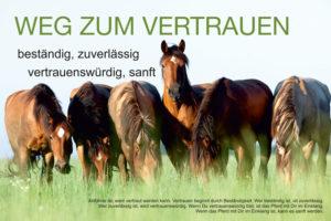Pferde verstehen - Der Weg zum Vertrauen