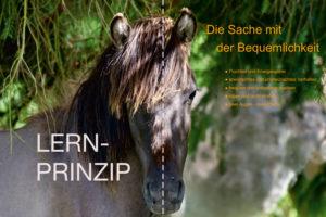 Pferde verstehen - Lernprinzip