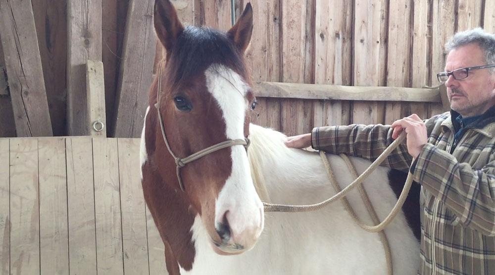Laterale Stellung: Hier lässt sich das Pferd willig im Genick stellen und trägt diese Stellung selbst.