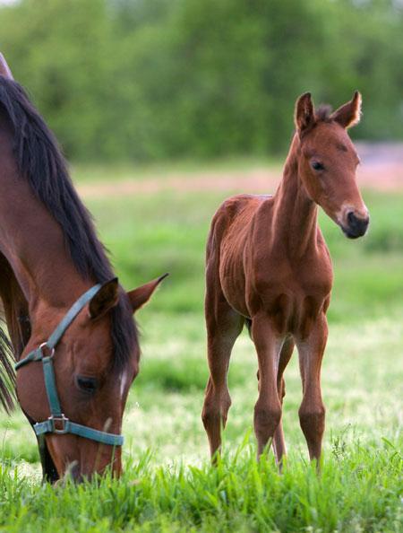 Fohlen- und Jungpferdetraining