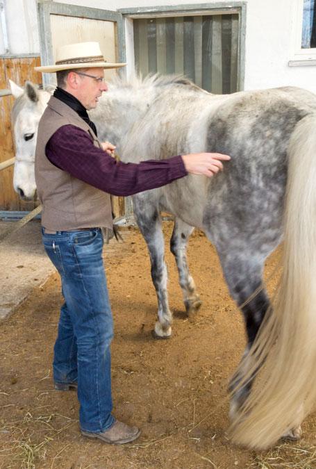 ...und das Pferd wird wieder an den Ausgangsort zurückgeführt (wer bewegt wen).
