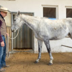 Aufgepasst: Bewegt sich das Pferd von der offene Beinstellung...