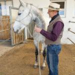Haben Pferde gelernt, an unserer Seite stehen zu bleiben, versuchen sie oft, sich auf andere Weise zu entziehen. In diesem Fall wendet es seinen Kopf von uns ab.