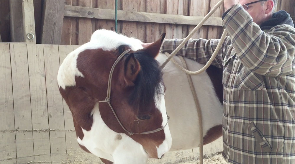 Laterale Kontrolle: Geht das Pferd gegen den Druck, verwirft es sich im Genick.
