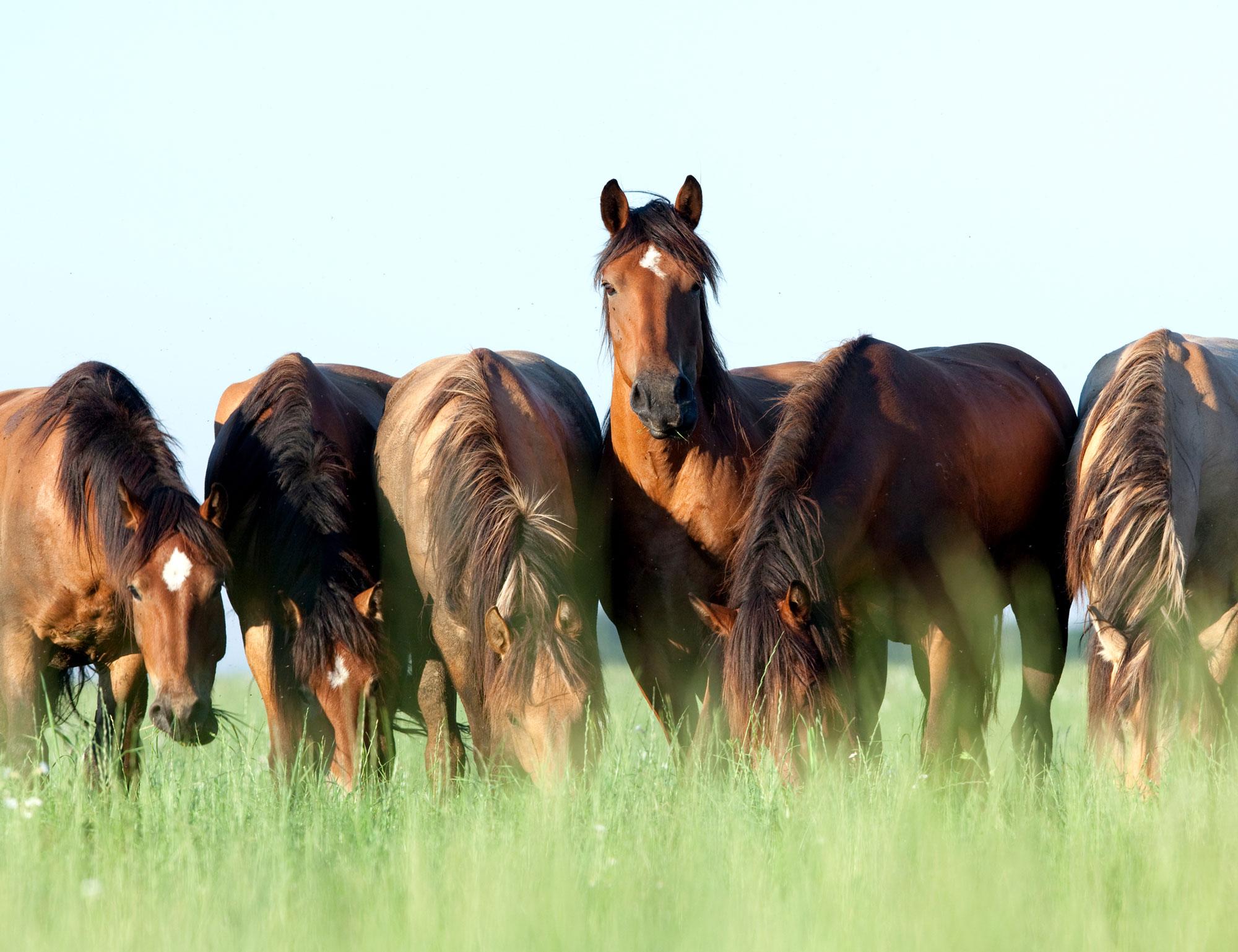 Titelbild Lucky Horses