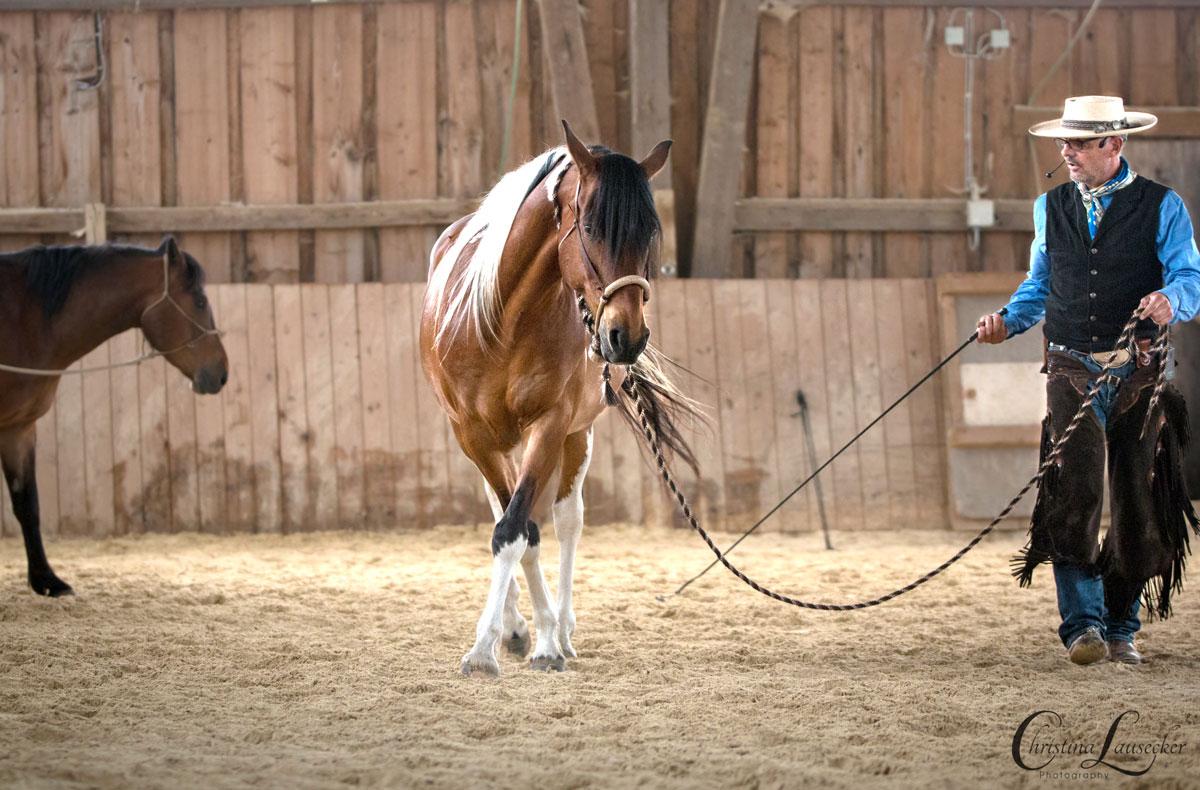 Pferde finden durch eine würdevolle und kompetente Ausbildung von alleine ihre gesunde Aufrichtung.