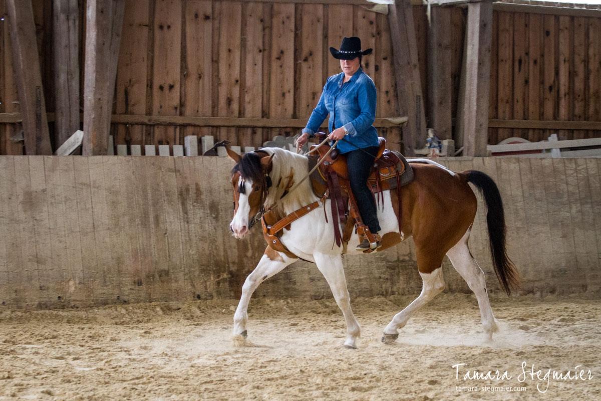 Eine für das Pferd gesunderhaltende relative Aufrichtung kommtaus einer aktiven Hinterhand und leicht aufgewölbtemRücken.