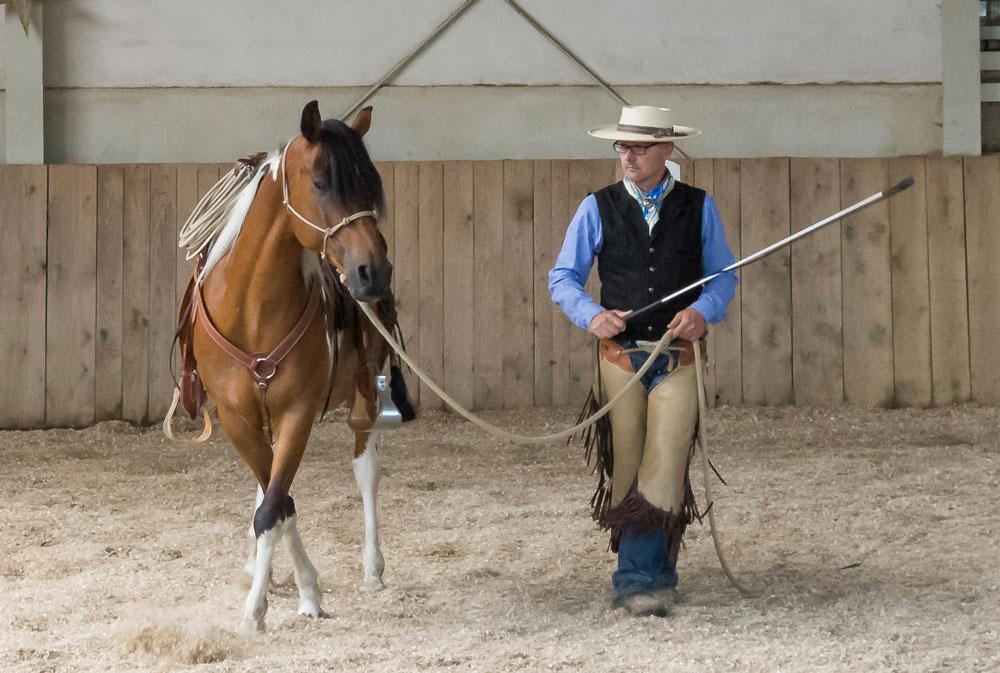 Richtiges Schenkelweichen auf der Geraden – das Pferd kreuzt syn-chron zum Menschen mit der Vor-hand in Bewegungsrichtung leicht vor der Hinterhand.