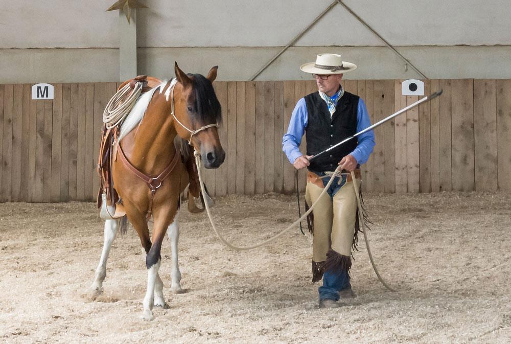 """Falsches Schenkelweichen auf der Geraden – das Pferd kreuzt zwar korrekt, aber die Vorhand """"hängt"""" deutlich hinter der Hinterhand."""