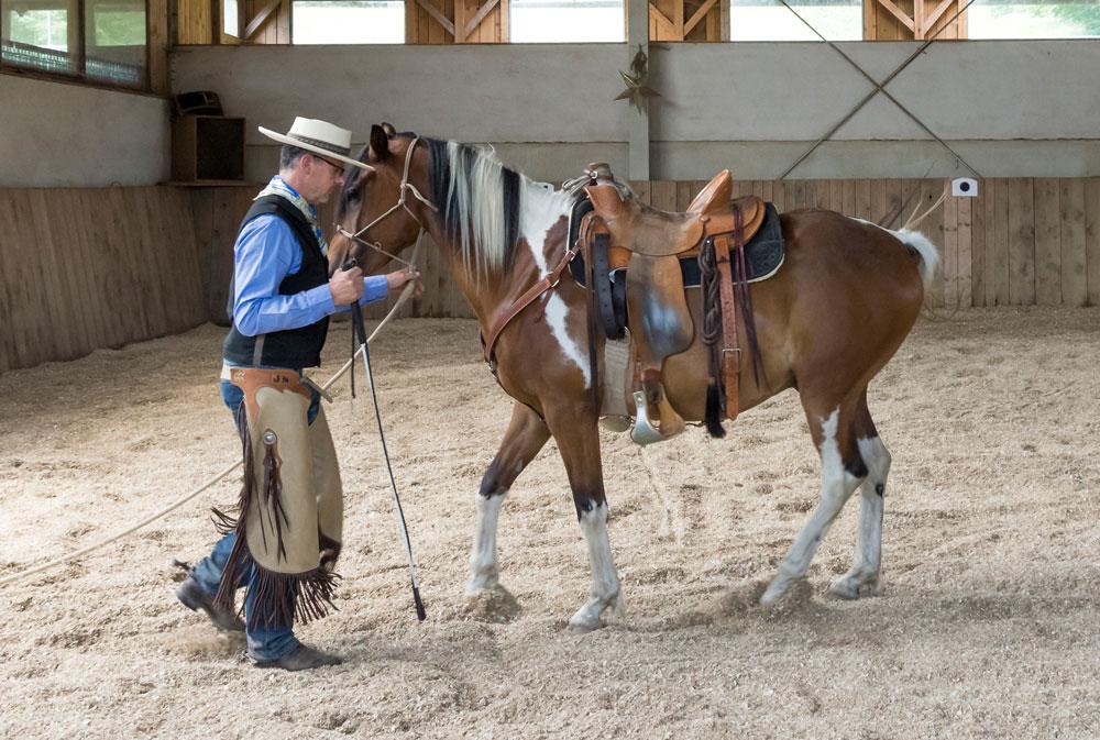 Rückwärts mit physischem Druck am Knotenhalfter – das gibt uns die Möglichkeit, die Haltung des Pferdes gut zu kontrollieren: Genick höchster Punkt, Kruppe leicht abgesenkt, Hinterhand setzt unter = Rücken hebt sich.