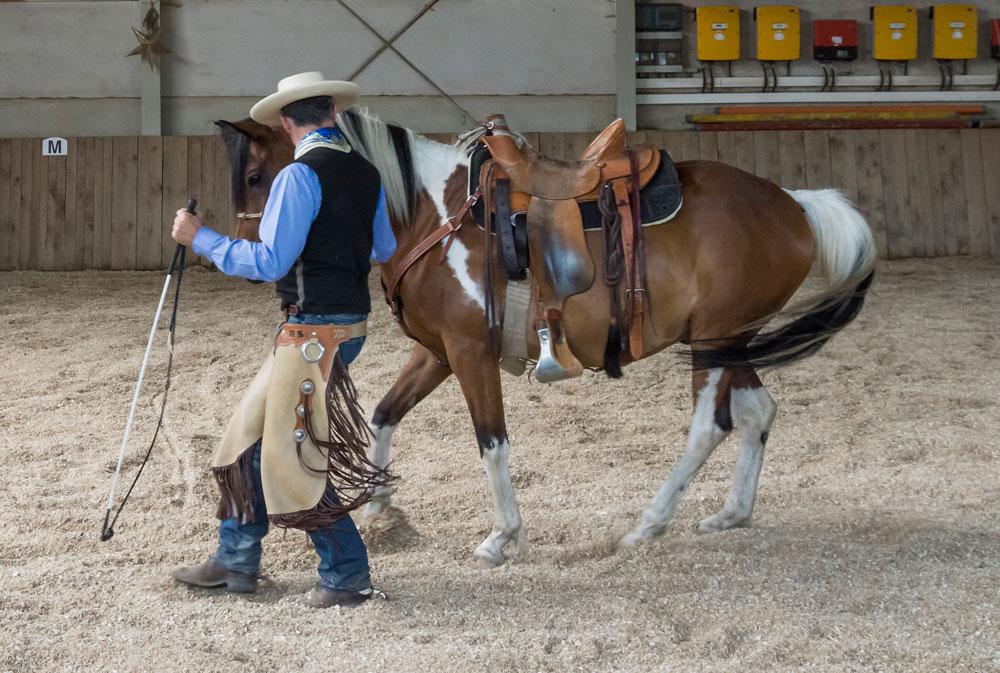 Rückwärts am losen Führseil aus dem Führen und Folgen heraus – synchronisiert sich unser Pferd hierbei mit uns, ist ein williges Rückwärts unter dem Sattel nicht mehr fern.