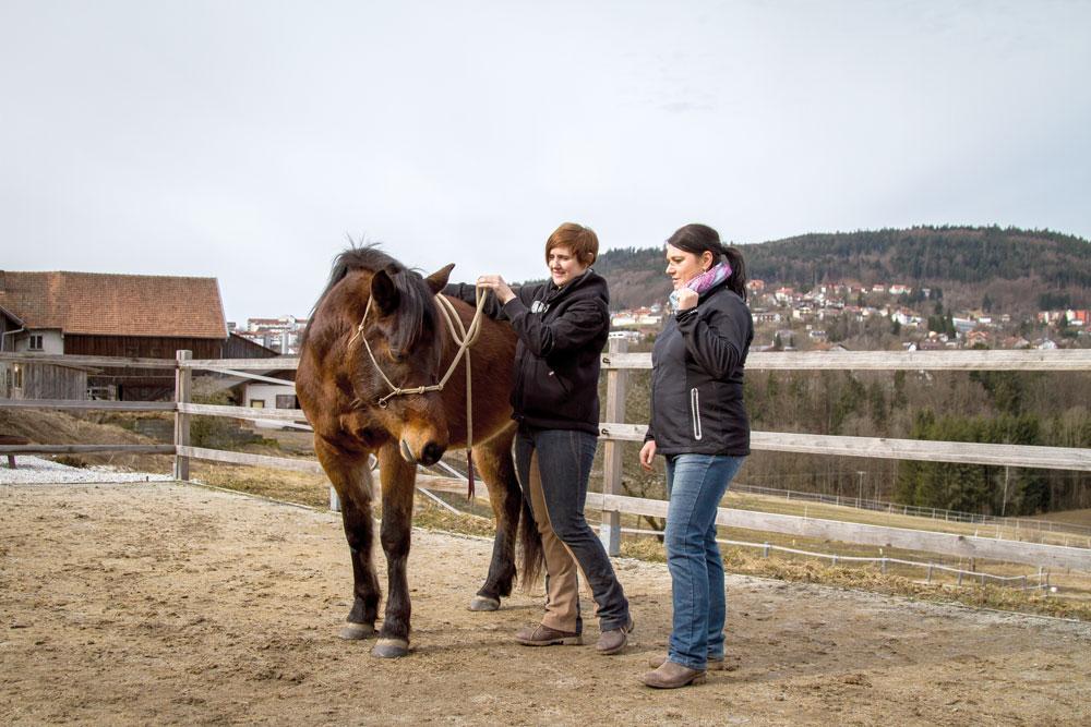 Erst wenn das Pferd fein auf die Zügelhilfe reagiert, können wir mit der Schenkelübung beginnen.