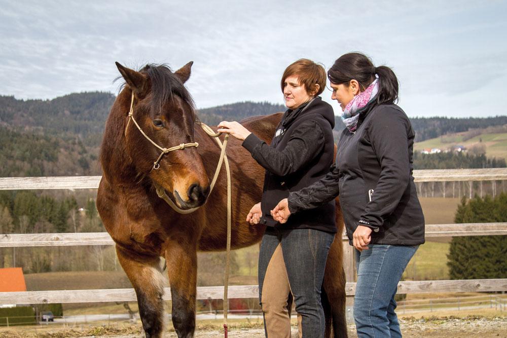 Reagiert das Pferd nicht auf die si-mulierte Schenkelhilfe, nehmen wir zur Verstärkung die Zügelhilfe da-zu.